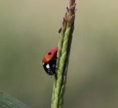 צילום חיפושית טכניקה של טבע דומם