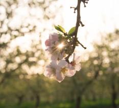 צילום טבע דומם של פרחים