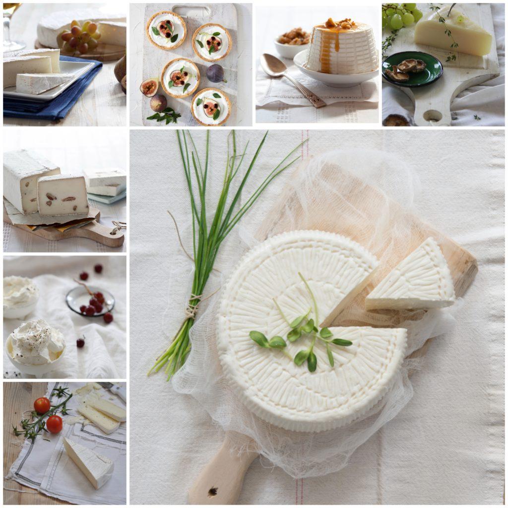BeFunky-collage-1סדנת-גבינות-לשבועות-1024x1024 צילום סטודיו גברא