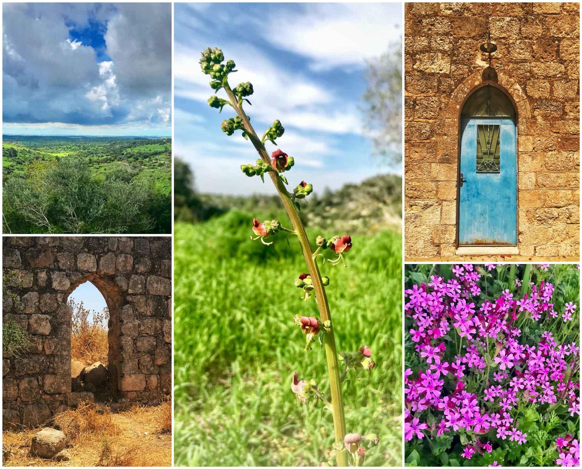 סיור טבע ונוף בעמק האלה, צילום טבע, צילום נוף