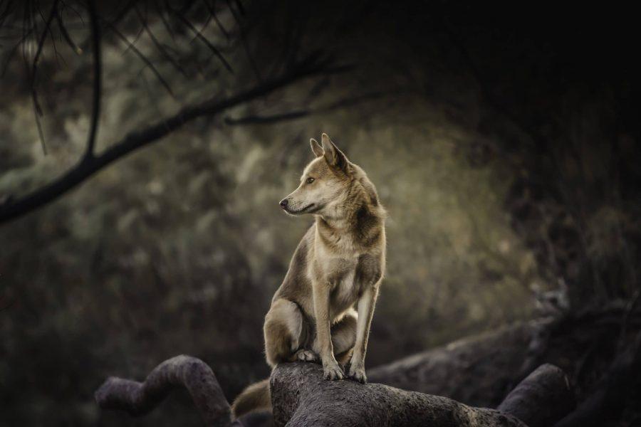 צילום טבע בלילה - לימודי צילום, קורס צילום מתקדם, קורס צילום למתקדמים, לימודי צילום מתקדם